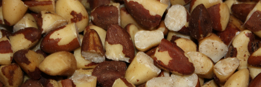 Sexually transmitted allergic reaction to brazil nuts